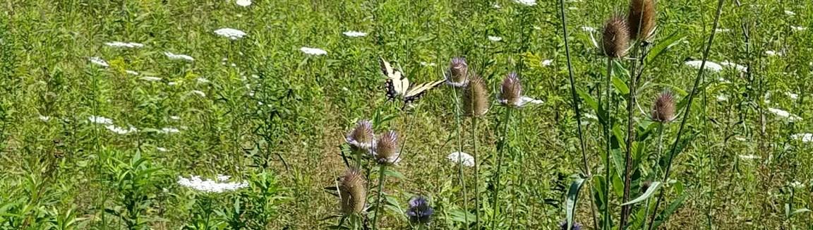 Granville Area Parks Bio Reserve