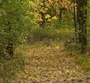 Morris Woods State Nature Preserve